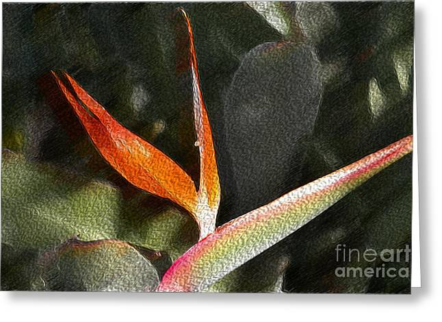 Hallmark Digital Art Greeting Cards - Pouring out the Oil Greeting Card by Beverly Guilliams