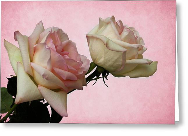 Powder Greeting Cards - Powder Puff Pink Greeting Card by Judy Vincent