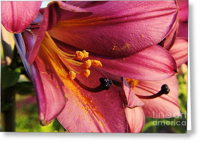 Powdered Pollen  Greeting Card by Jeff Swan