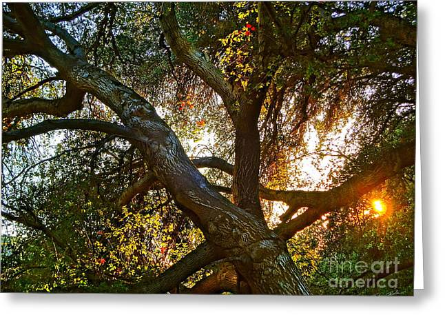 Grounding Greeting Cards - Power entwined Greeting Card by Gem S Visionary