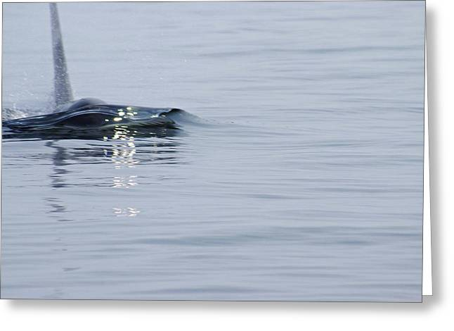 Bull Dolphin Greeting Cards - Power in Motion Greeting Card by Marilyn Wilson