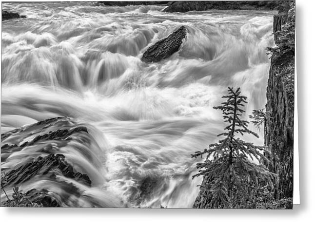 Black And White Waterfall Greeting Cards - Power Stream Greeting Card by Jon Glaser