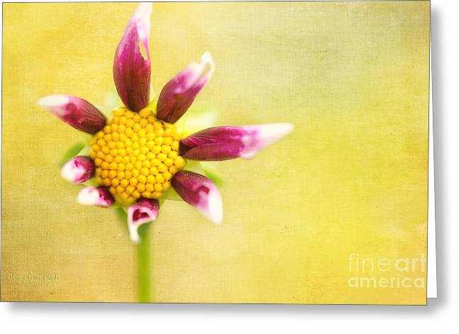 Power To The Flower Greeting Card by Beve Brown-Clark Photography