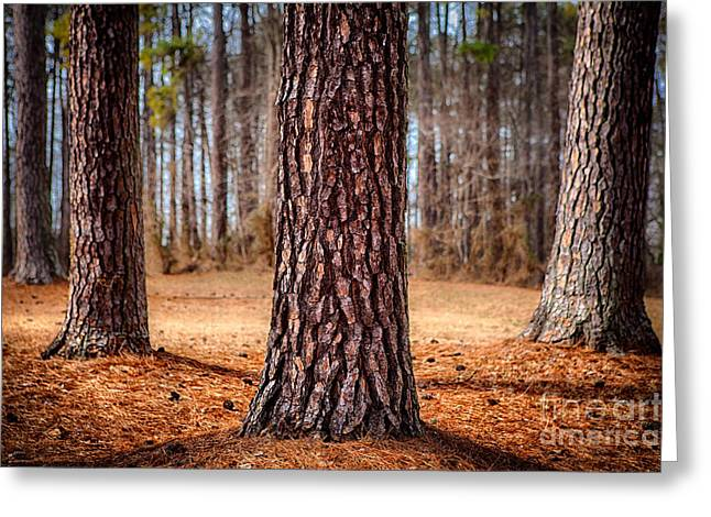 Photographers Greensboro Greeting Cards - Powerful Pines I Greeting Card by Dan Carmichael