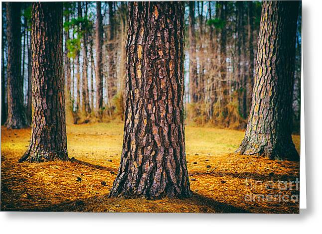Pine Cones Greeting Cards - Powerful Pines II Greeting Card by Dan Carmichael