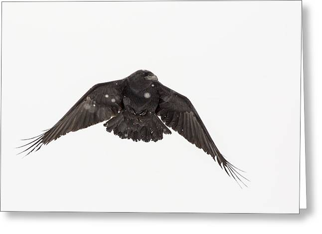 Corax Greeting Cards - Powering Through the Snow Greeting Card by Tim Grams