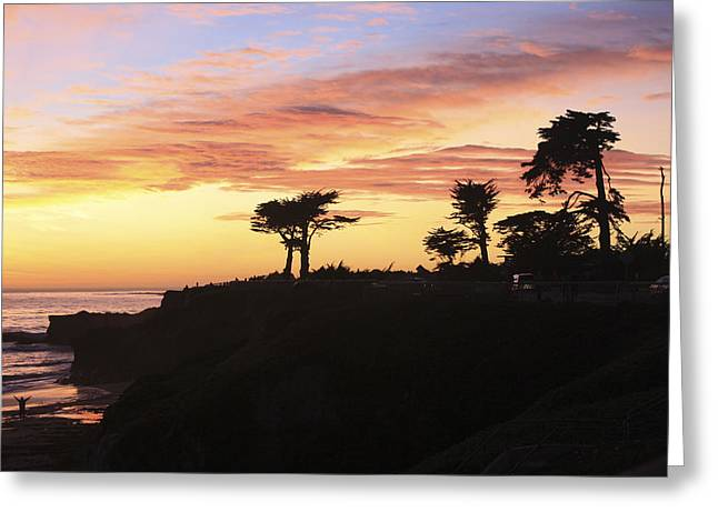 Santa Cruz Ca Greeting Cards - pr 238 - Trees at Sunset Greeting Card by Chris Berry