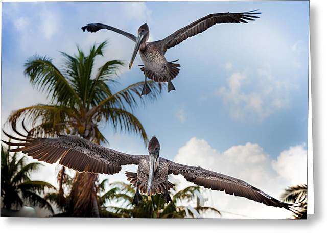 Pelican Art Greeting Cards - Practice Makes Perfect Greeting Card by Karen Wiles