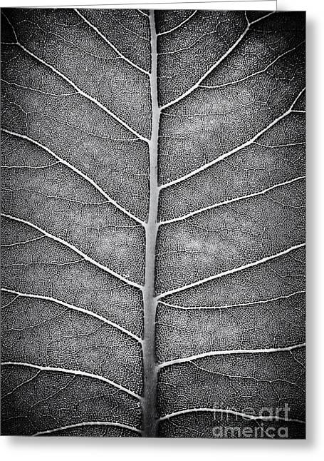 Prairie Dock Leaf Monochrome Greeting Card by Tim Gainey