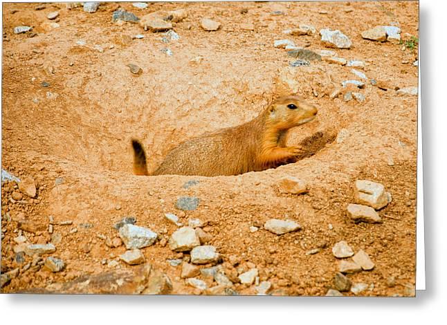 Prairie Photo Greeting Cards - Prairie Dog digs Greeting Card by Chris Flees