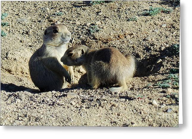 Prairie Dogs Greeting Cards - Prairie Dogs Greeting Card by David Bearden