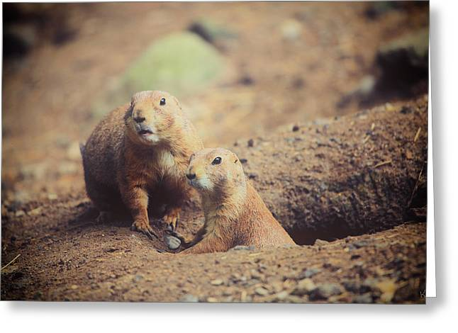 Prairie Dogs Greeting Card by Karol Livote