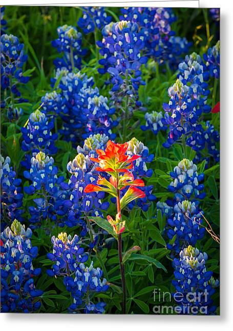 Bluebonnet Scene Greeting Cards - Prairie Fire Greeting Card by Inge Johnsson