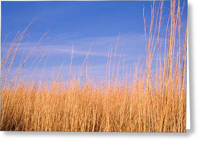 Fall Grass Greeting Cards - Prairie Grass, Blue Sky, Marion County Greeting Card by Panoramic Images