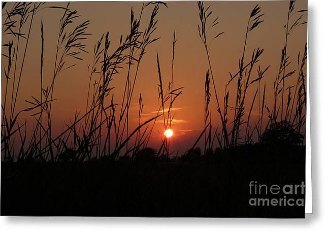 Vale Greeting Cards - Prairie Grass Sunset Greeting Card by Deborah Smolinske