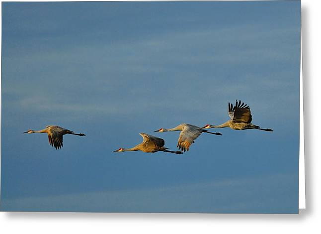 Sandhill Cranes Greeting Cards - Prairie Morning Greeting Card by Tony Beck