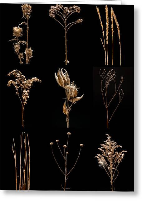 Milkweed Greeting Cards - Prairie Plant Still Life Greeting Card by Steve Gadomski