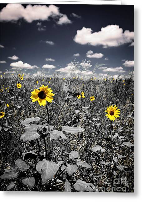 Summer Landscape Photographs Greeting Cards - Prairie Sunflowers  Greeting Card by Elena Elisseeva