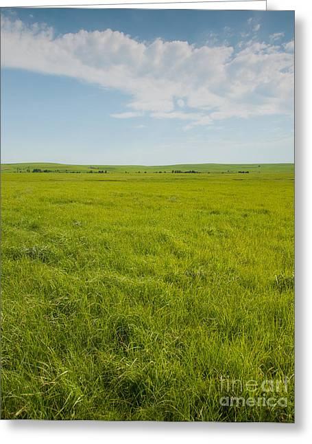 Pastureland Greeting Cards - Prairie View Greeting Card by Sari ONeal