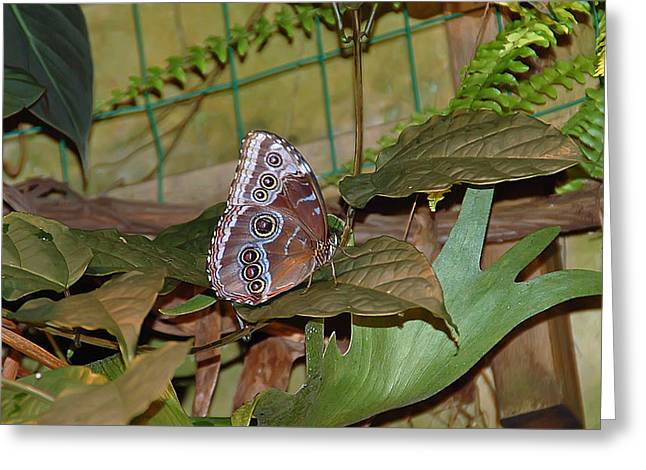 Wings Greeting Cards - Prancin Greeting Card by Aimee L Maher Photography and Art