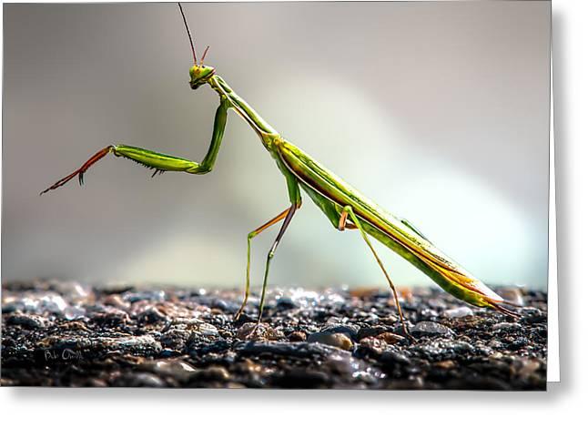 Worm Greeting Cards - Praying Mantis  Greeting Card by Bob Orsillo