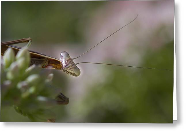 Mantises Greeting Cards - Praying Mantis Curiosity Greeting Card by Jean Noren