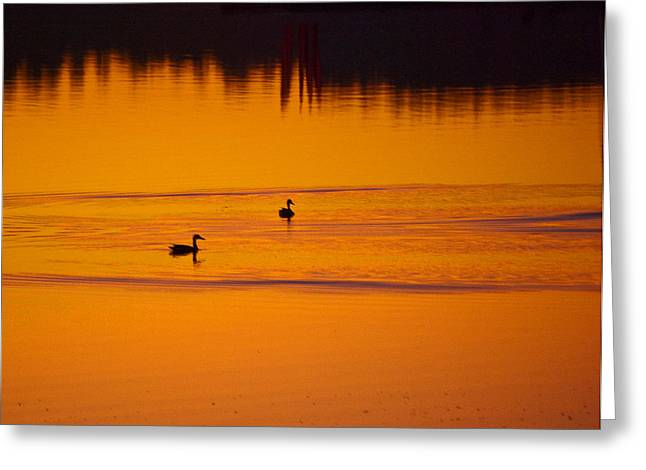 Penn Cove Greeting Cards Greeting Cards - Pre Dawn Light Greeting Card by Ron Roberts
