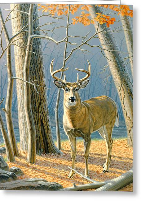 Fall Scene Greeting Cards - Pre-Flight- Whitetail Buck Greeting Card by Paul Krapf