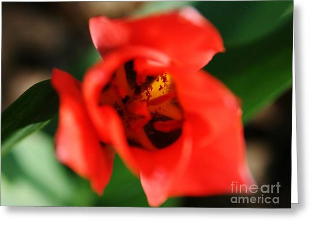 Flower Photography Greeting Cards - Pre-Pollination  Greeting Card by Neal  Eslinger