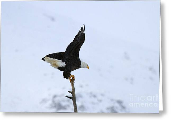 Yakima River Greeting Cards - Precarious Perch Greeting Card by Mike  Dawson
