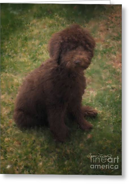 Precious Australian Labradoodle Greeting Card by Susan  Lipschutz