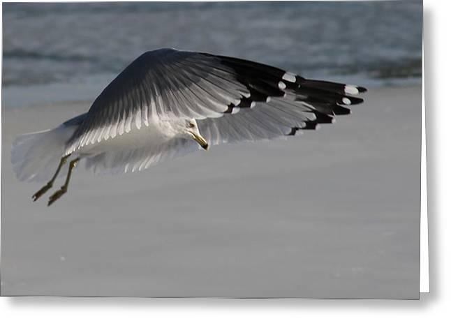 Sea Birds Pyrography Greeting Cards - Precious Flight Greeting Card by Valia Bradshaw