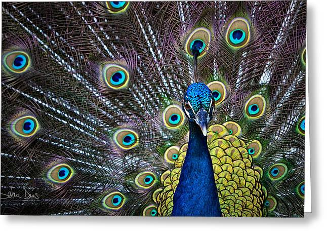 Artistic Photography Greeting Cards - Precious Greeting Card by Joan Davis