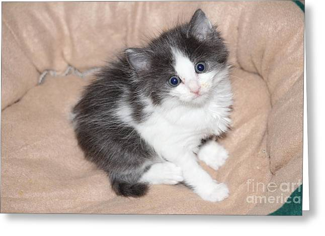 Precious Kitten Greeting Card by Michelle Powell