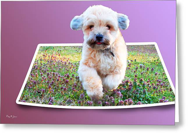 Dogs Digital Greeting Cards - Dog - Pet - Lhasa - Precious Pup Greeting Card by Barry Jones