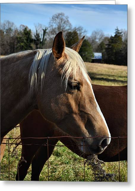Old 421 Greeting Cards - Precious the Palomino - 51008321d Greeting Card by Paul Lyndon Phillips