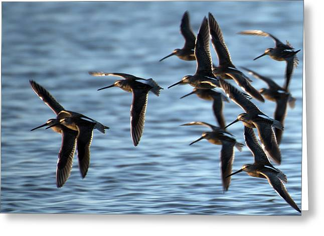 Lessor Greeting Cards - Precision Flying  Greeting Card by Gerald Murray Photography