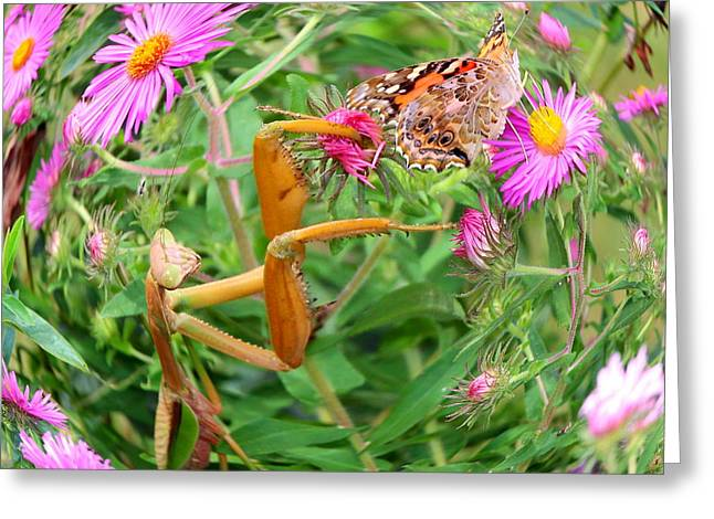 Butterfly Prey Greeting Cards - Predator and Prey Greeting Card by Andrea Kappler