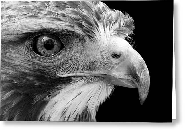 Common Greeting Cards - Portrait of Common Buzzard in black and white Greeting Card by Lukas Holas