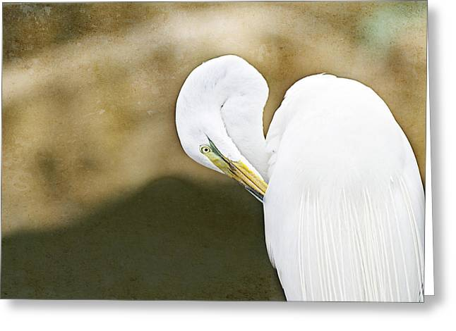 Egrets Greeting Cards - Preening Greeting Card by Rebecca Cozart