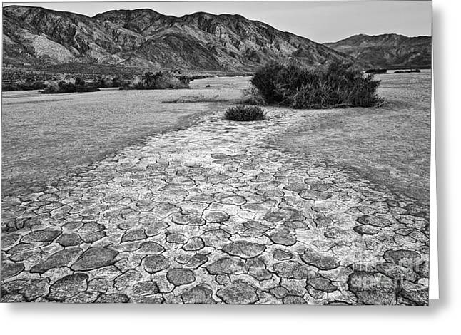 Dry Lake Greeting Cards - Prehistoric - Clark Dry Lake located in Anza Borrego Desert State Park in California. Greeting Card by Jamie Pham