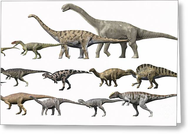 Comparison Greeting Cards - Prehistoric Era Dinosaurs Of Niger Greeting Card by Nobumichi Tamura
