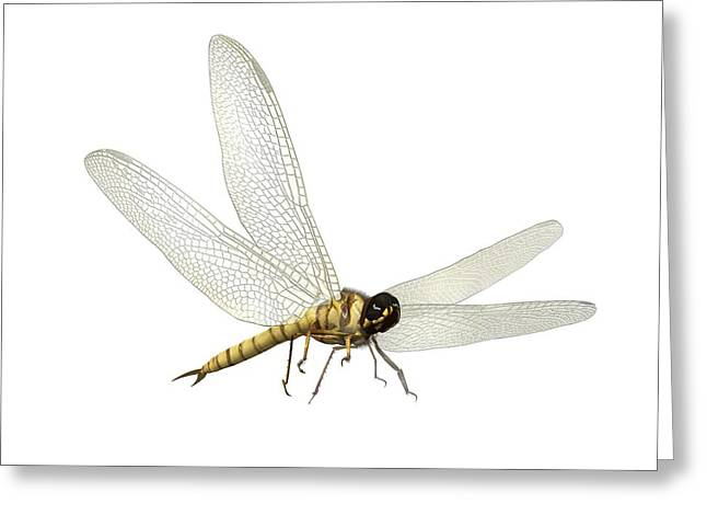 Pangea Greeting Cards - Prehistoric flying insect, artwork Greeting Card by Science Photo Library