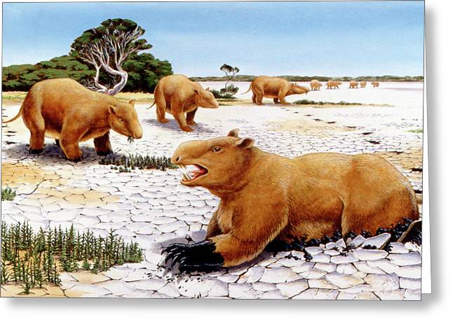 Prehistoric Giant Wombats Greeting Card by Deagostini/uig