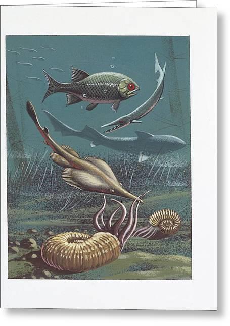 Prehistoric Marine Life Greeting Card by Deagostini/uig
