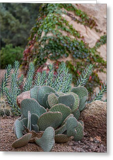Prescott Greeting Cards - Prescott Succulent Garden Greeting Card by Aaron Burrows