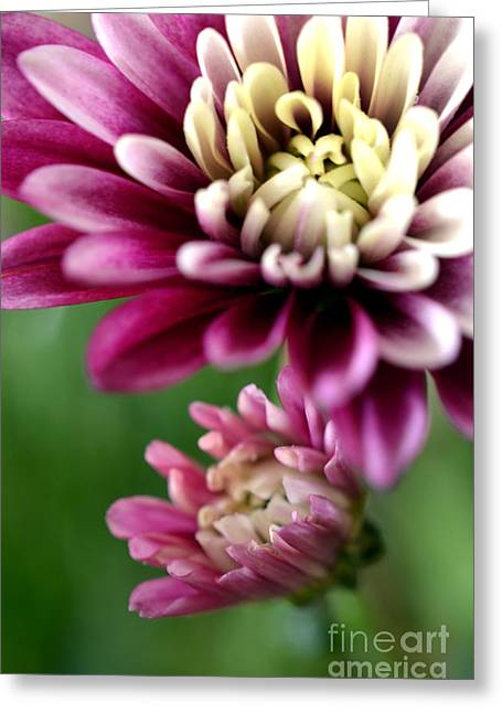 Pinks And Purple Petals Greeting Cards - Present and Future Greeting Card by Deb Halloran