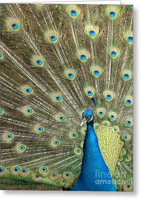 Amazing Gardens Greeting Cards - Pretentious Peacock Greeting Card by Sabrina L Ryan