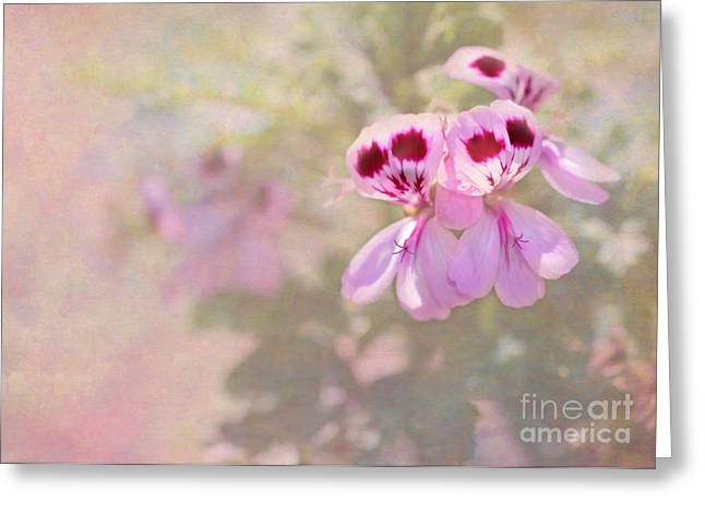 Pretty And Delicate In Pink Greeting Card by Sabrina L Ryan