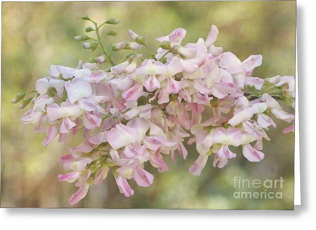 Florida Flowers Greeting Cards - Pretty and Delicate Greeting Card by Sabrina L Ryan